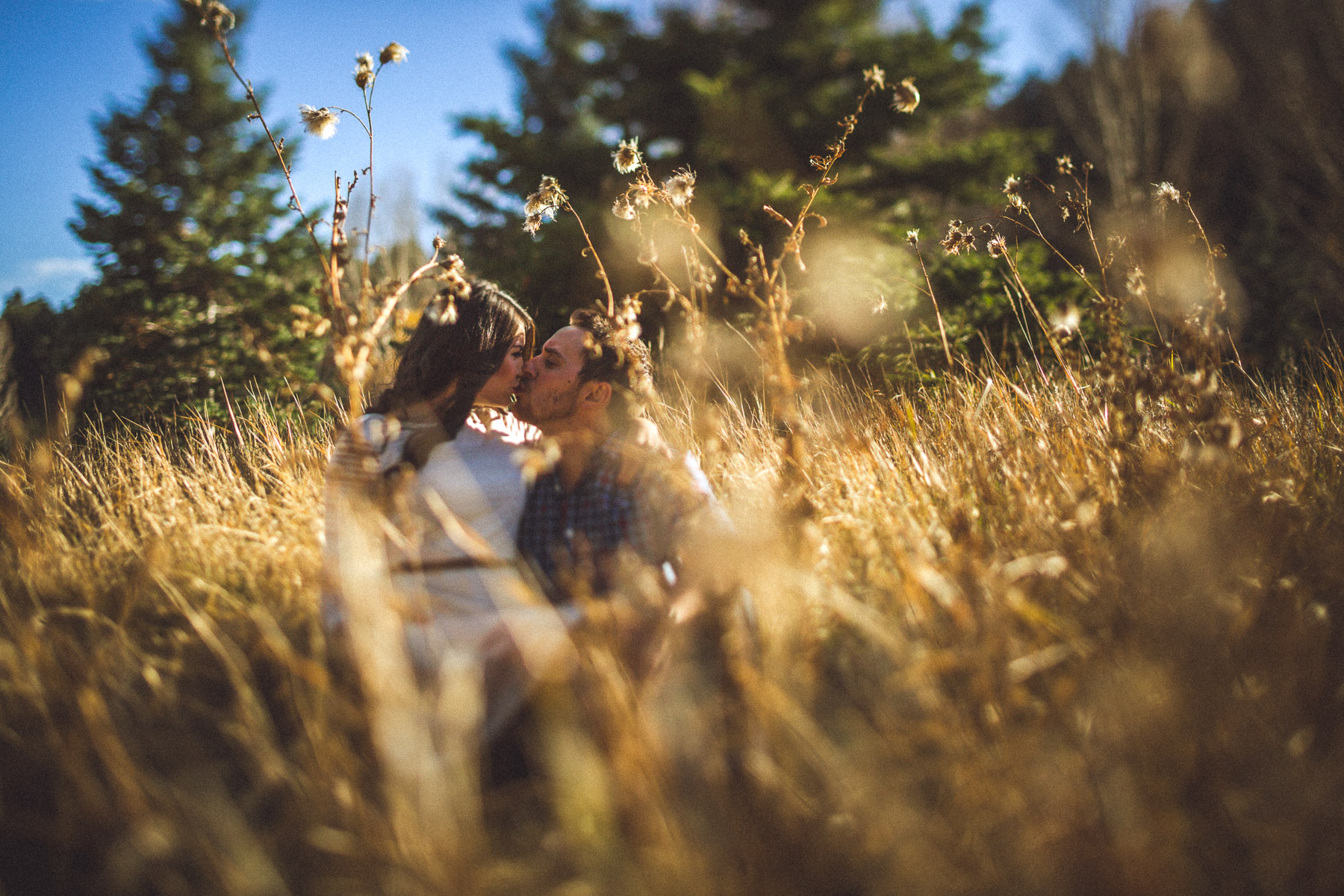 Sunny Golden Field Engagement Photos in Denver