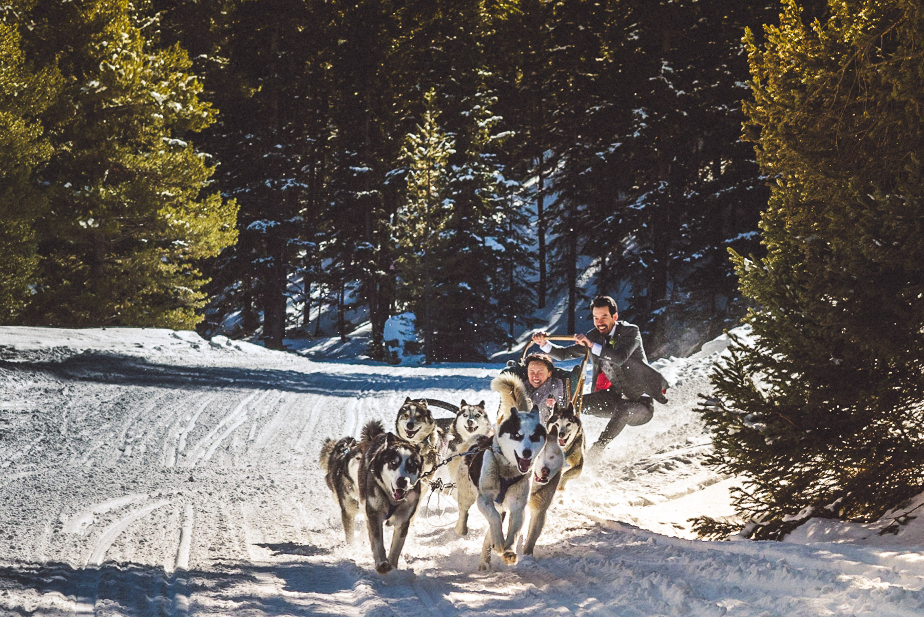 Bride & Groom on Dog Sled in Snow